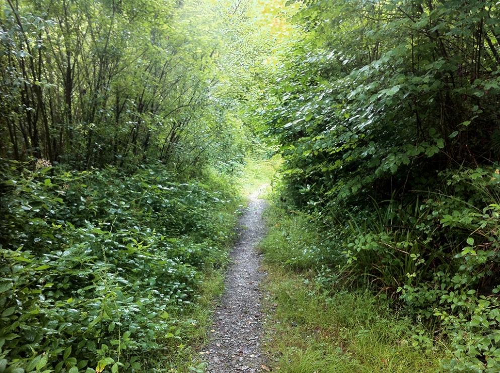 forestlodgetrail